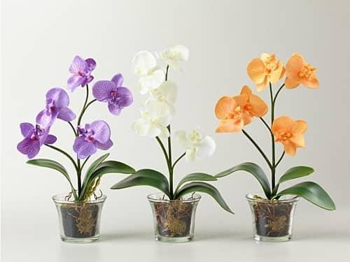 Особенности применения цитокининовой пасты на орхидеях